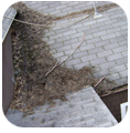 Pressure washing shingles & roof algae & mold